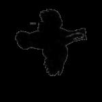 logo of Bexar Audubon Society
